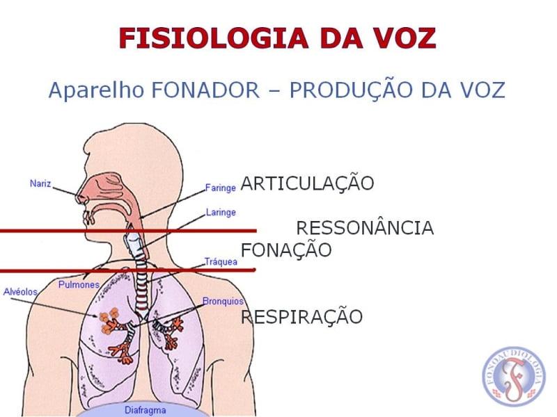 Técnica Vocal e Fisiologia da Voz