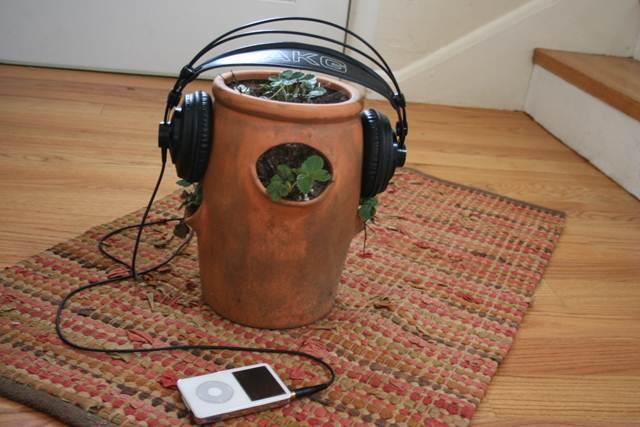 Efeitos da Música Sobre Plantas e Animais