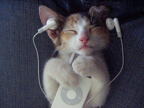 Gatos Também Gostam de Música