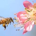 Flores Deixam Néctar Mais Doce