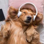 Impactos da Música Sobre Animais